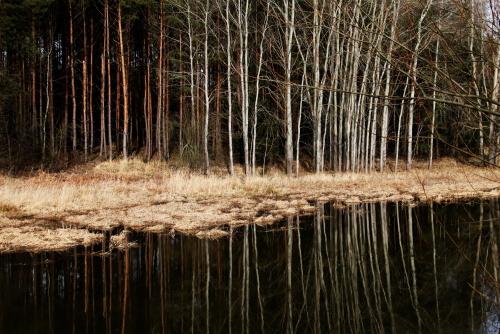 02/20 Dobříšský lesy