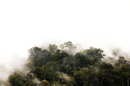 03/19 Parque Nacional Tapantí