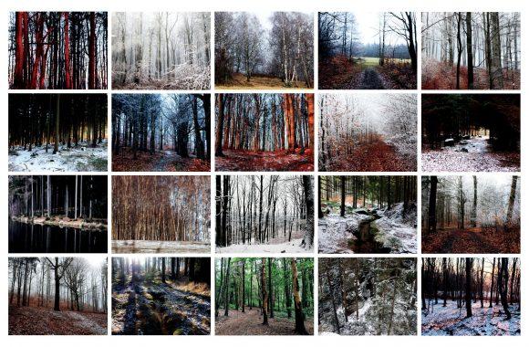 03/2021 – 5×4 loňských lesů